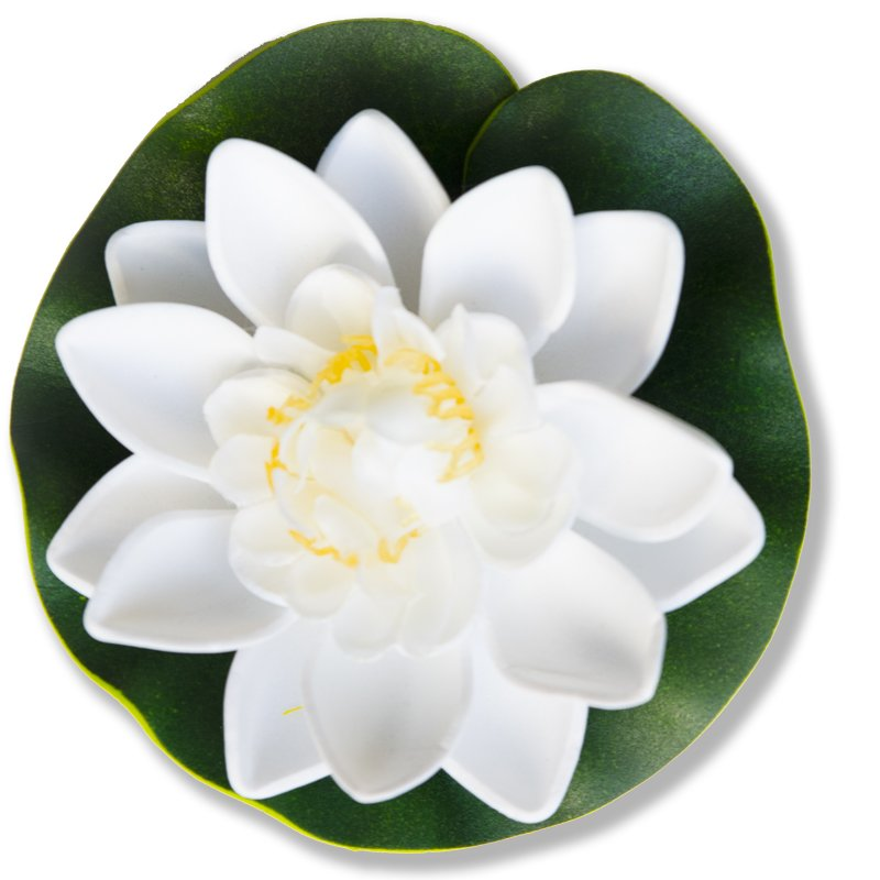 White Water Lily Extract